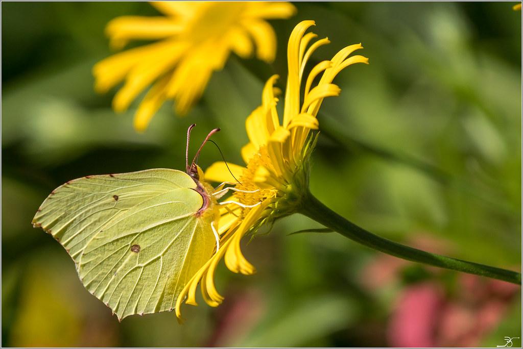 Jardin botanique Saverne: Paps 43040077982_feb6a45350_b