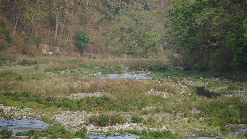 DSC07476 Индия. Национальный парк Джим Корбетт. Индия. Национальный парк Джим Корбетт. 43042555641 6093a283b3 c
