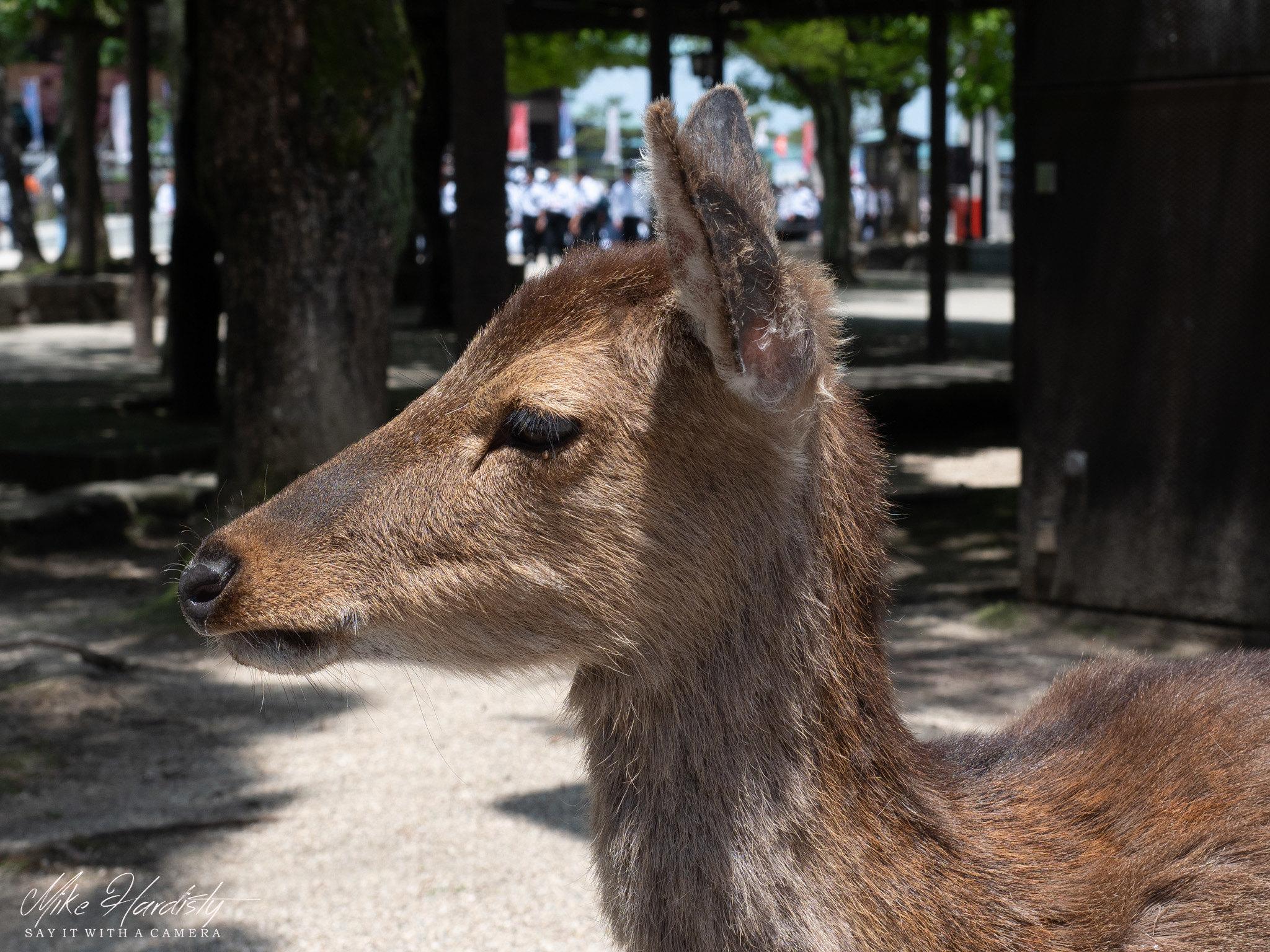 Ferral Deer