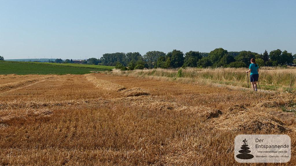 Wandern im Selztal: Abgeerntetes Getreidefeld