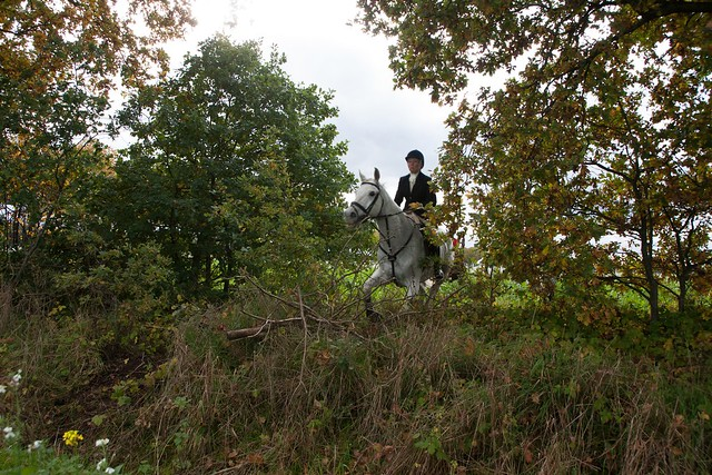 Midland Hunt Landhorst 2015-9022
