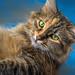 1-cat-D75_0281-LR6