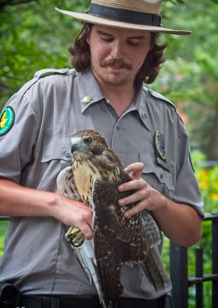 Urban Park Ranger rescues hawk in Tompkins Square