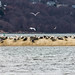 Seals on the Sandbar