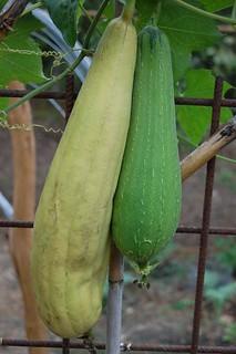 esponja-vegetal-cosecha-almacenamiento_2