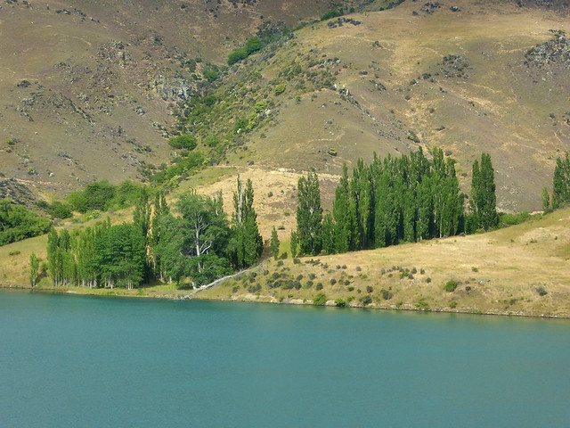 Sparse stands of trees grow in the various valleys over the ruggesd landscape of central Otago in the South Island.
