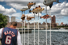 East River fish