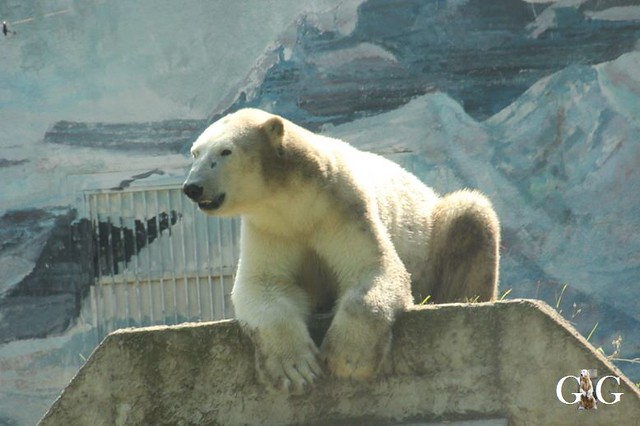 Besuch Zoo Sosto 20.06.+21.06.201877
