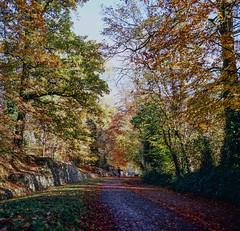 Verulamium Park . Roman Wall . St Albans