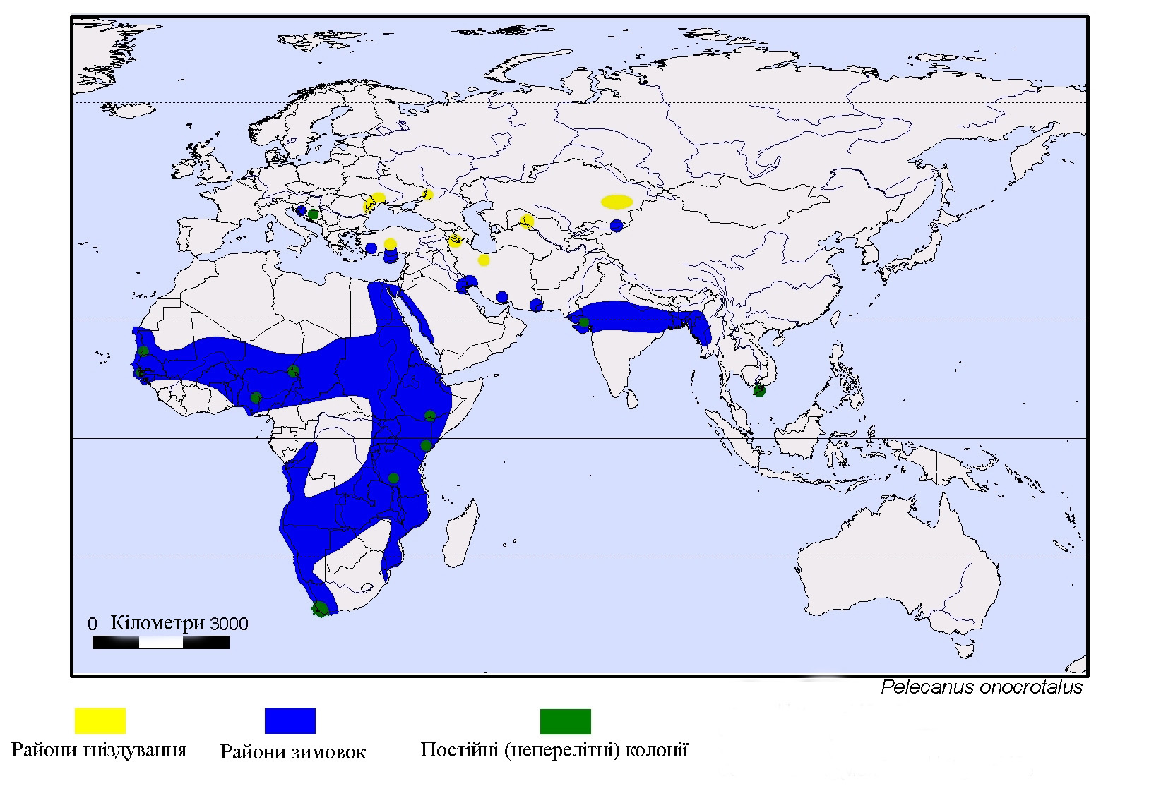 Distribution map of the great white pelican. Yellow = non-breeding area; blue = breeding area; green = year-round area