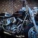 Black Shuck-Harley