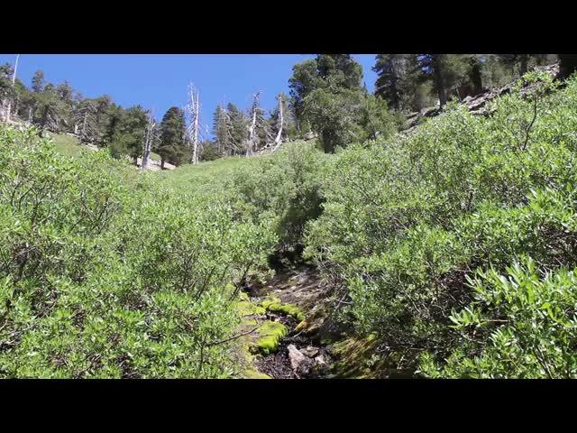 162 Video of Limber Pine Spring