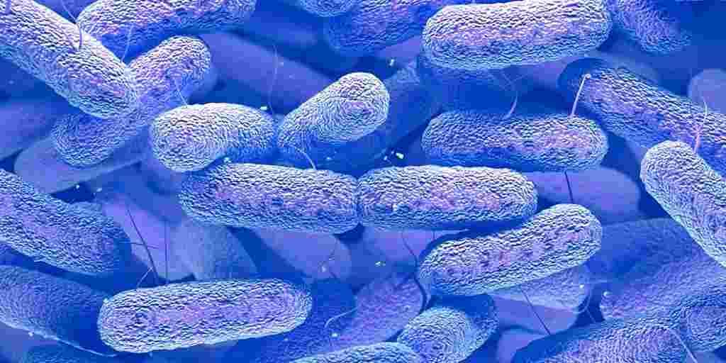 Un pathogène qui peut aveugler ou tuer des jeunes en bonne santé