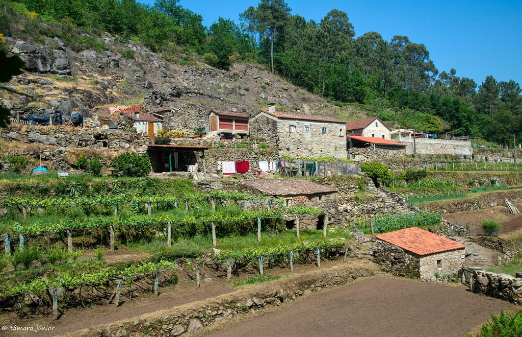 81.- Rota do Monte Aloia (718)