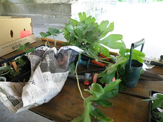 Plants to Exchange by Penny O'Connor.