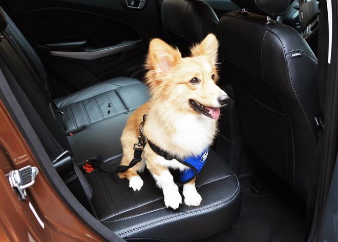 【圖六】今年的Ford安全節能駕駛體驗營,除了多項駕駛技巧基礎課程,更提供孩童、寵物的乘車安全知識。