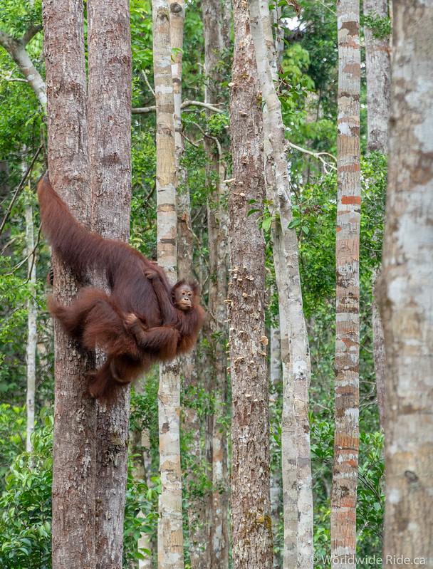 Borneo-43