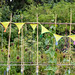 Scotland's Gardens Craigintinney Telferton July 2018 -112