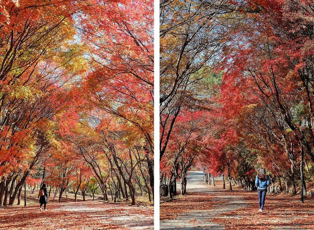 autumn_seoul_surreal