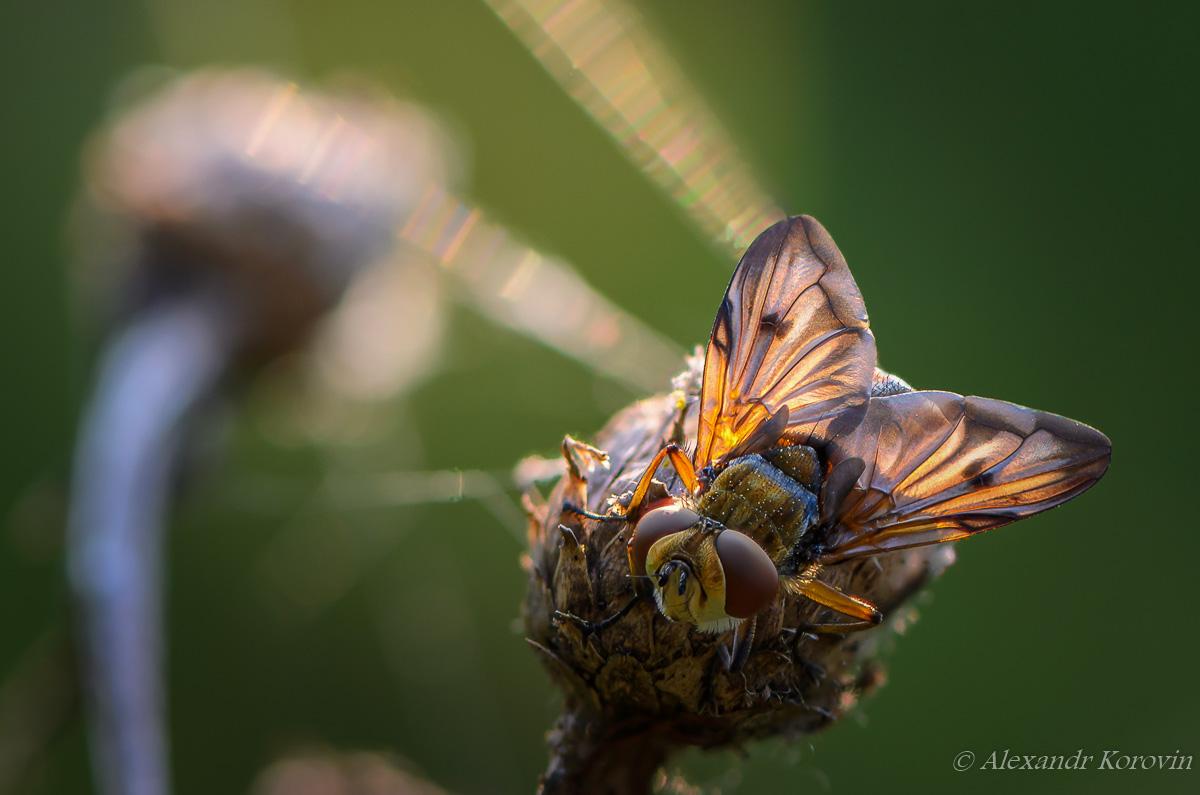 Sleeping fly in the sun
