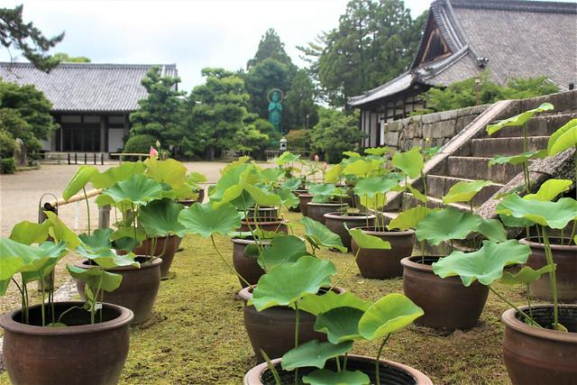 seidaiji-hasu007