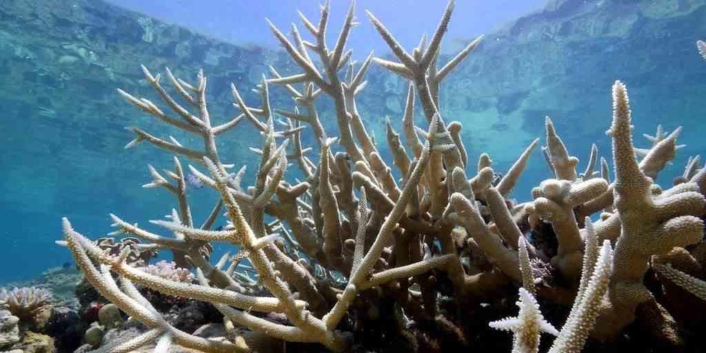 L'immunité pourrait être la clé pour résoudre la crise corallienne