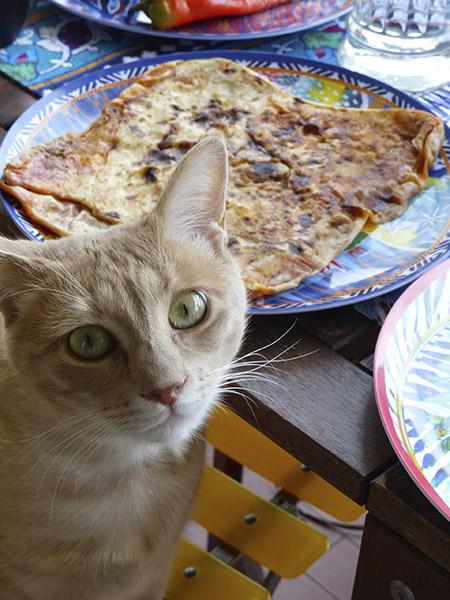 petit chaton gourmand