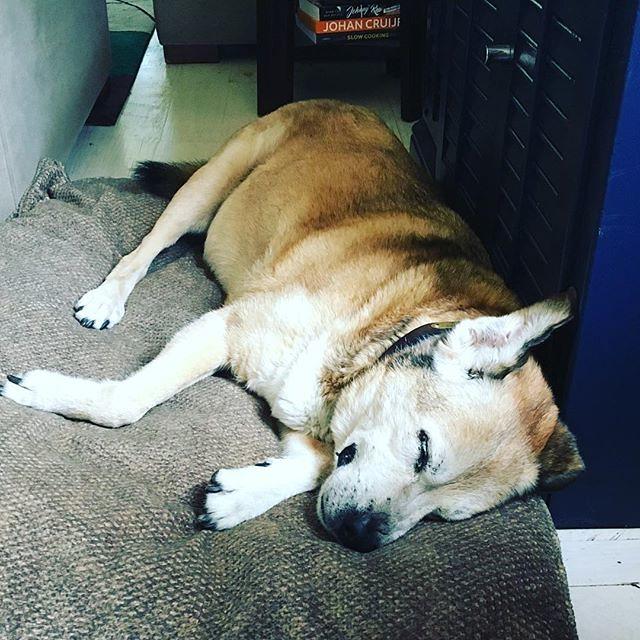My ❤️ #barkingdogcreationsstudio #olddogsrule #peasandcarrotts #johnnyandme #olddogsrule