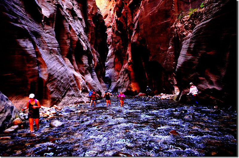 The Narrows, Zion National Park (42)
