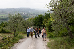 Fascia di ulivi tra Assisi e Spoleto