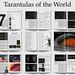 "The official ""Tarantulas of the World"" handbook V2.0"