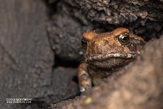 Frog in tree trunk - DSC_2244
