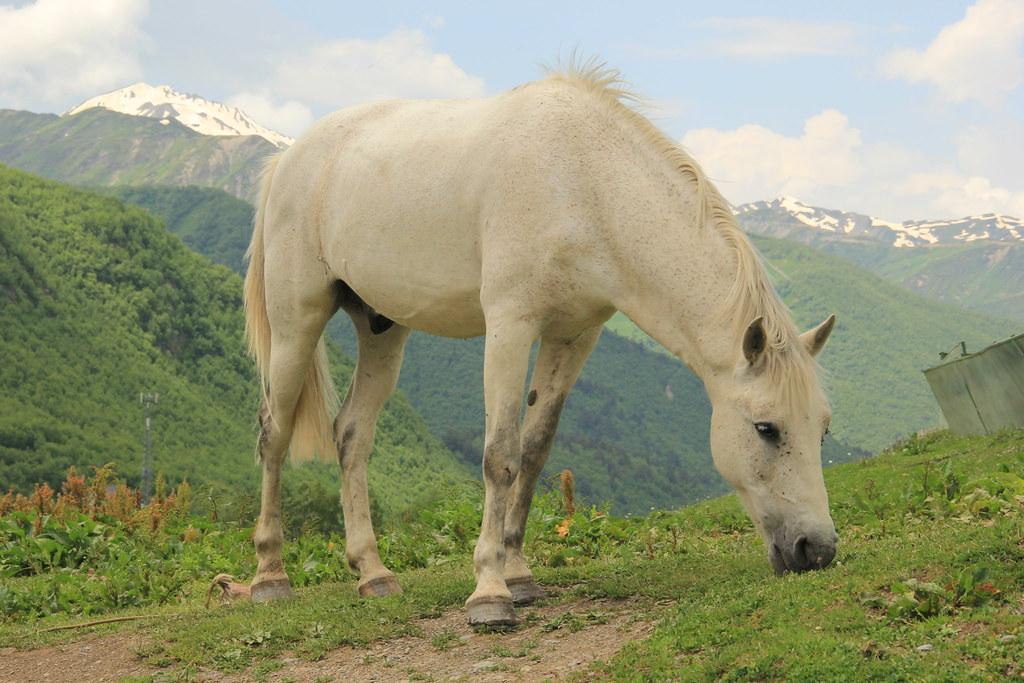Horse, Ushguli