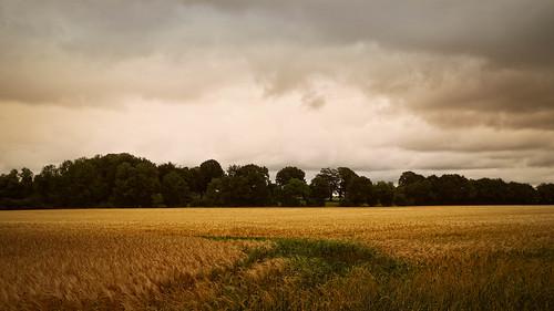 20180624-153725 Summer cornfield landscape