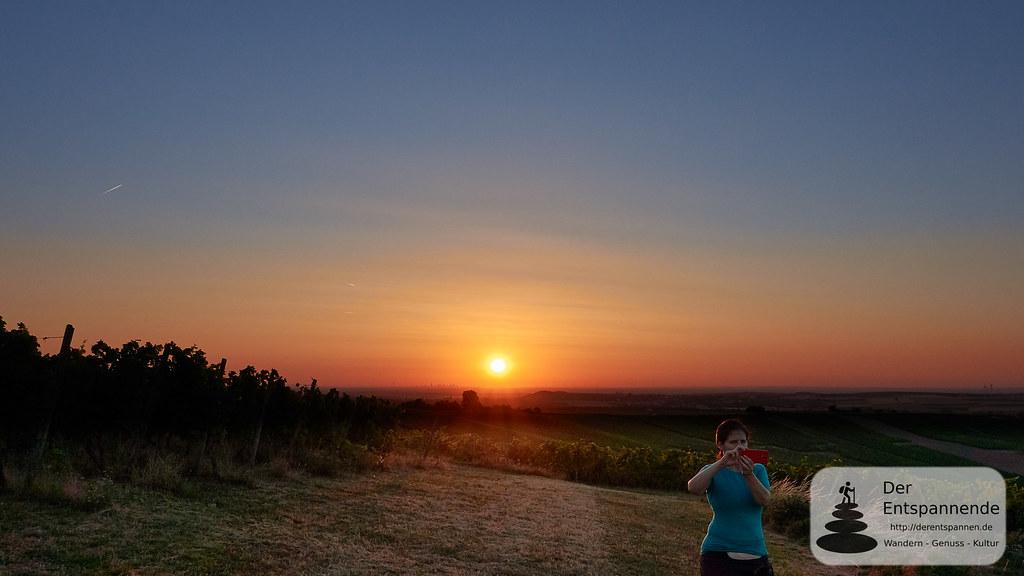 Sonnenaufgang über Weinbergen und Rheinhessen