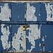 Peeling Blue Shutters