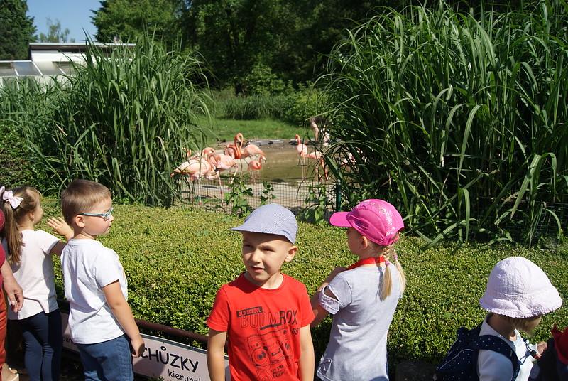 Zoo Ostrava   Misie i  Lale