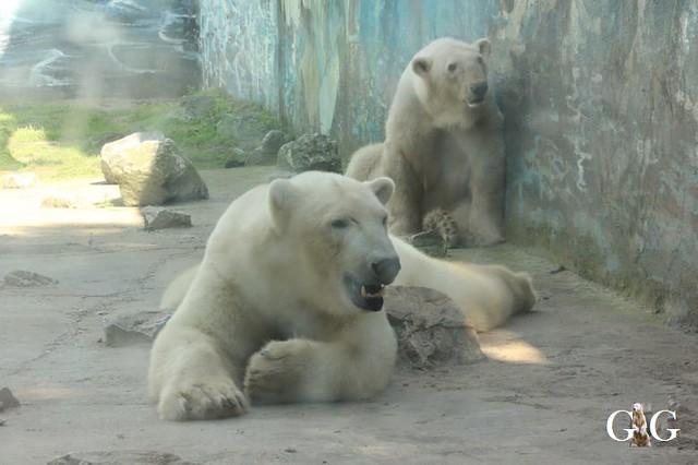 Besuch Zoo Sosto 17.06.201835