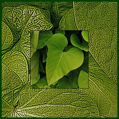 12 - Green
