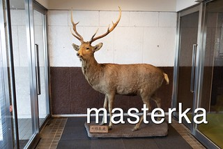 根室グランドホテルの鹿