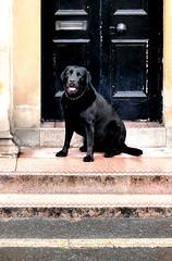 dog on the vet's steps
