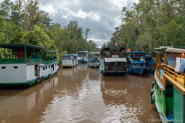 Borneo-31