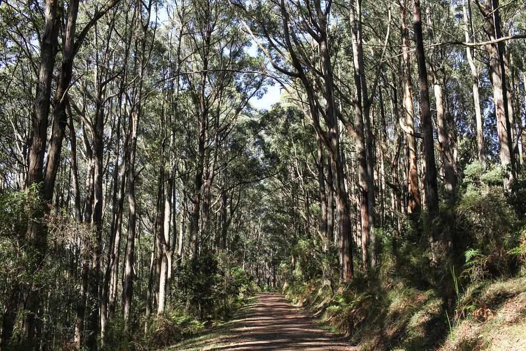 Mount Dandenong, Victoria