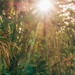 Morning at Wekiva Falls by J. Parker Natural Florida Photographer
