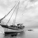 Shipwrecked in B&W by Lovely Lizards Photography