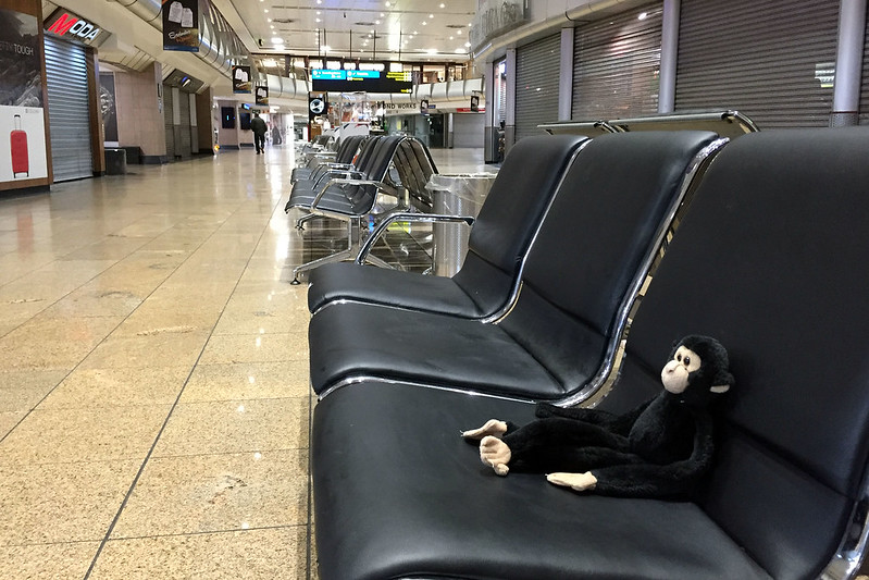 Monkey killing time in Johannesburg Airport