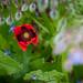 Scotland's Gardens Craigintinney Telferton July 2018 -89
