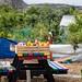 Scotland's Gardens Craigintinney Telferton July 2018 -75