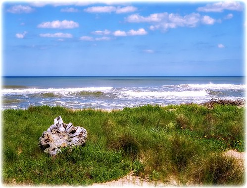 marinelandbeach marineladflorida beach graas flowers waves ocean atlanticocean coast coastal coastline shore shoreline seashore sea water bluesky clouds landscape driftwood