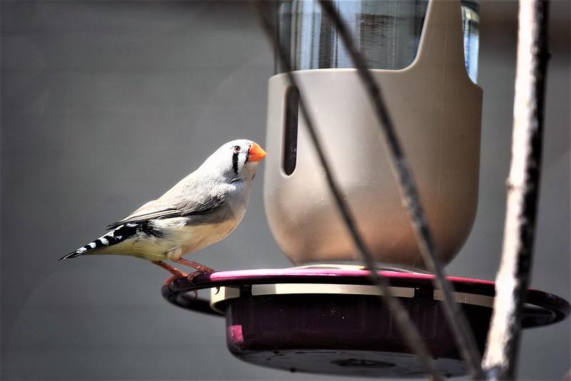 Birds 02.07 (1)